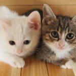 猫 レボリューションの副作用と効果範囲を解説!