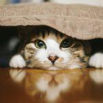 ブロードラインは猫の耳ダニに効果はある?