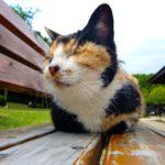 猫の顎に黒いブツブツ!ニキビの治し方と原因を解説!