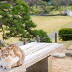 レボリューション猫用の使い方 – 効果的な方法を解説
